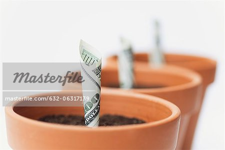 One-hundred dollar bills planted in flower pots Stock Photo - Premium Royalty-Free, Image code: 632-06317139