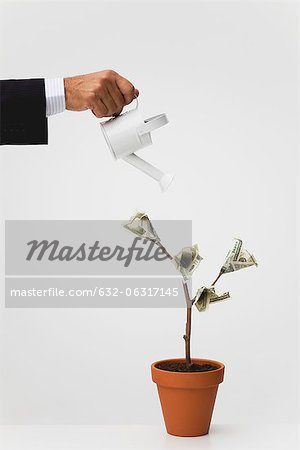 Businessman watering potted tree with hundred dollar bills growing on it Stock Photo - Premium Royalty-Free, Image code: 632-06317145