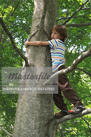 Boy standing in tree Stock Photo - Premium Royalty-Free, Image code: 632-06317592