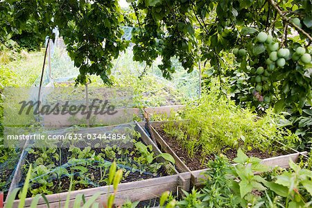 Netting protecting vegetables growing in garden Stock Photo - Premium Royalty-Free, Image code: 633-03444856