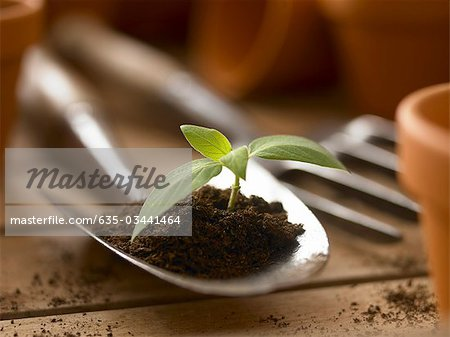 Close up of seedling growing in dirt on trowel Stock Photo - Premium Royalty-Free, Image code: 635-03441464