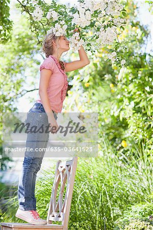 Girl standing on chair and reaching to smell flowers growing on tree Stock Photo - Premium Royalty-Free, Image code: 635-03641523