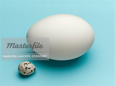 Speckled egg with white egg Stock Photo - Premium Royalty-Free, Image code: 635-05550667
