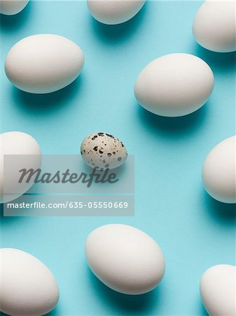 Speckled egg with white eggs Stock Photo - Premium Royalty-Free, Image code: 635-05550669