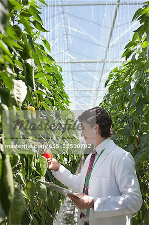 Scientist examining produce in greenhouse Stock Photo - Premium Royalty-Free, Image code: 635-05550702