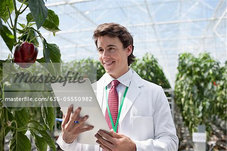 Scientist examining plants in greenhouse