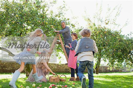 Multi-generation family harvesting apples in orchard Stock Photo - Premium Royalty-Free, Image code: 635-05656407
