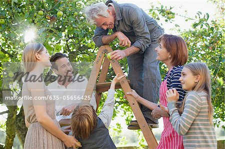 Multi-generation family harvesting apples in orchard Stock Photo - Premium Royalty-Free, Image code: 635-05656425
