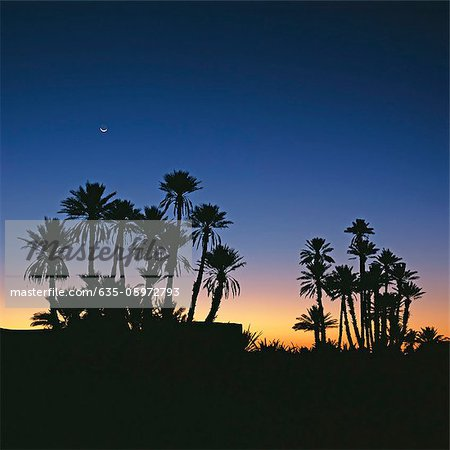 Silhouette of palm trees against sunset sky Stock Photo - Premium Royalty-Free, Image code: 635-05972793