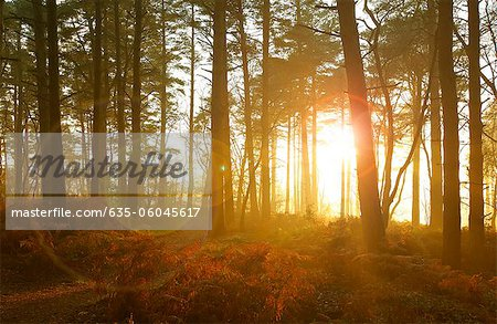 Sun shining through trees in woods Stock Photo - Premium Royalty-Free, Image code: 635-06045617