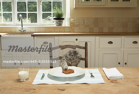 A cat eating at the table Stock Photo - Premium Royalty-Free, Image code: 649-02055513