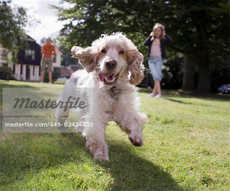 Dog running towards camera Stock Photo - Premium Royalty-Free, Image code: 649-02424030