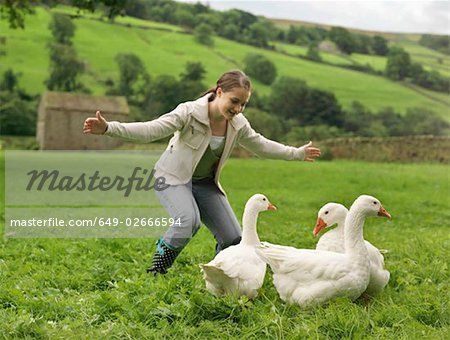 Girl Rounding Up Geese Stock Photo - Premium Royalty-Free, Image code: 649-02666594