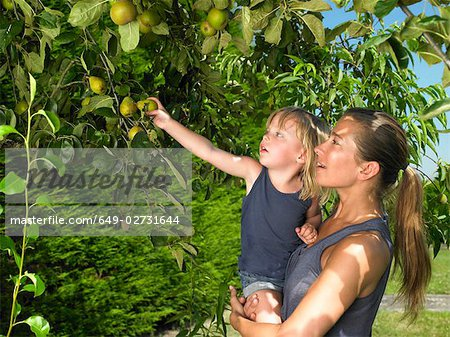Woman and girl snatching apples Stock Photo - Premium Royalty-Free, Image code: 649-02731644