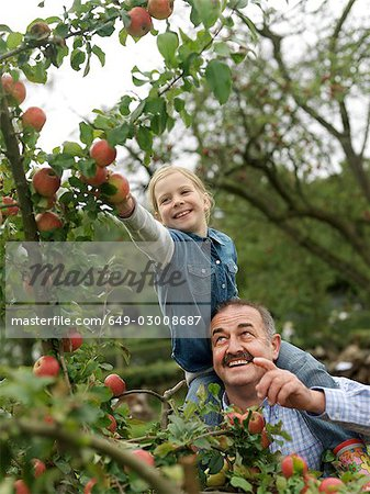 Man and girl picking apples on shoulders Stock Photo - Premium Royalty-Free, Image code: 649-03008687
