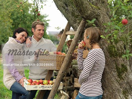 People picking apples in baskets Stock Photo - Premium Royalty-Free, Image code: 649-03008691