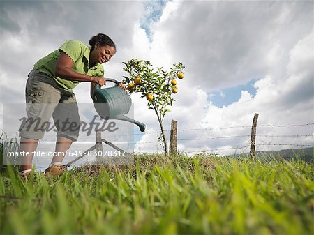 Woman Watering A Young Orange Tree Stock Photo - Premium Royalty-Free, Image code: 649-03078317