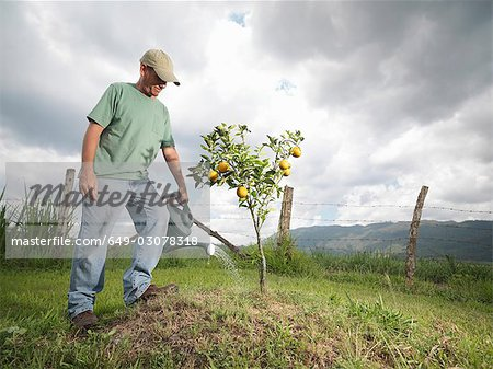 Man Watering A Young Orange Tree Stock Photo - Premium Royalty-Free, Image code: 649-03078318