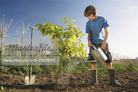 Pre-adolescent boy planting tree Stock Photo - Premium Royalty-Free, Image code: 649-03078710