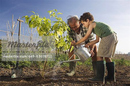 Grandfather and grandson planting tree Stock Photo - Premium Royalty-Free, Image code: 649-03078711