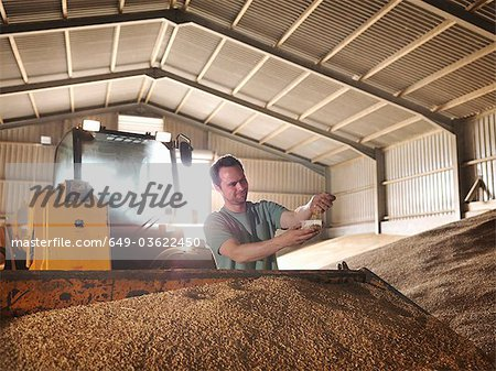 Farmer with a sample of grain Stock Photo - Premium Royalty-Free, Image code: 649-03622450