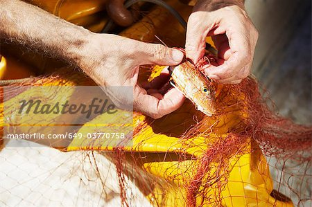 Fisherman taking fish out of nets Stock Photo - Premium Royalty-Free, Image code: 649-03770758