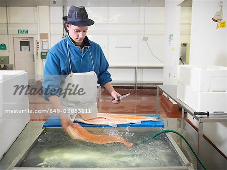 Worker filleting salmon in plant Stock Photo - Premium Royalty-Free, Image code: 649-03883811