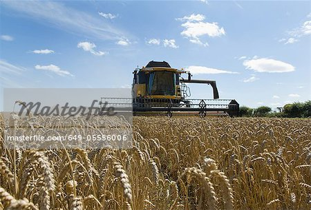 Thresher harvesting wheat Stock Photo - Premium Royalty-Free, Image code: 649-05556006
