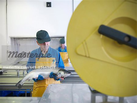 Worker in fish processing plant Stock Photo - Premium Royalty-Free, Image code: 649-05649458