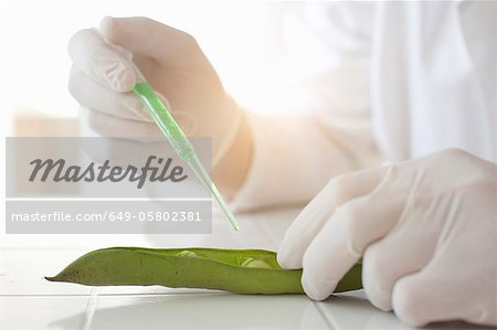 Scientist dropping liquid on peas in pod Stock Photo - Premium Royalty-Free, Image code: 649-05802381