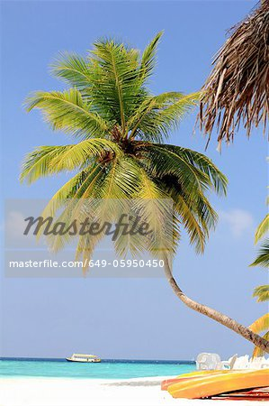 Palm trees growing on tropical beach Stock Photo - Premium Royalty-Free, Image code: 649-05950450