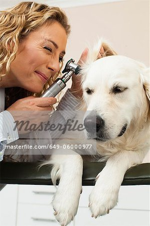 Veterinarian examining dog in office Stock Photo - Premium Royalty-Free, Image code: 649-06000977