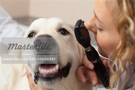 Veterinarian examining dog in office Stock Photo - Premium Royalty-Free, Image code: 649-06000982