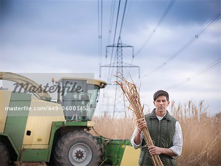 Farmer carrying elephant grass Stock Photo - Premium Royalty-Free, Image code: 649-06001452