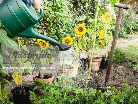 Hand watering plants in backyard Stock Photo - Premium Royalty-Free, Image code: 649-06040079
