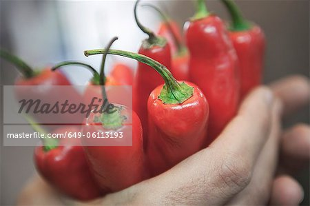 Close up of hands holding peppers Stock Photo - Premium Royalty-Free, Image code: 649-06113193