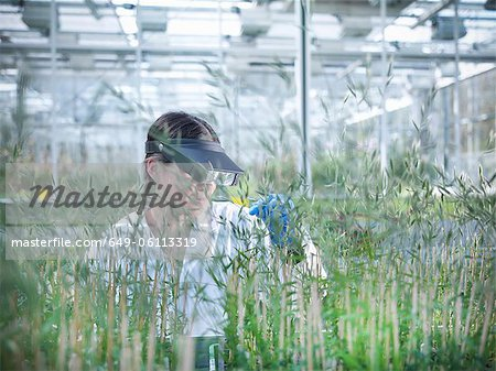 Scientist examining plants in greenhouse Stock Photo - Premium Royalty-Free, Image code: 649-06113319