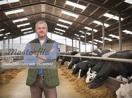 Farmer standing by cows in barn Stock Photo - Premium Royalty-Free, Image code: 649-06164942