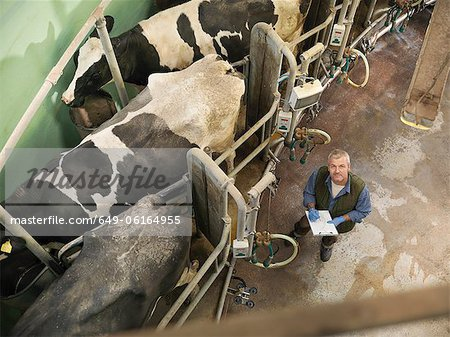 Farmer working in milking parlor Stock Photo - Premium Royalty-Free, Image code: 649-06164955