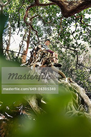 Boy sitting in tree top Stock Photo - Premium Royalty-Free, Image code: 649-06305340
