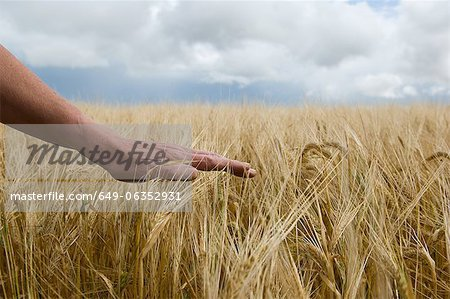Close up of hand in tall grass Stock Photo - Premium Royalty-Free, Image code: 649-06352931