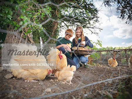Children gathering eggs from chickens Stock Photo - Premium Royalty-Free, Image code: 649-06353056