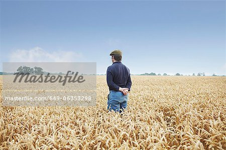 Farmer standing in field of wheat Stock Photo - Premium Royalty-Free, Image code: 649-06353298