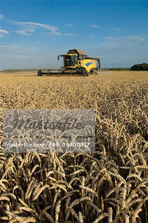 Harvester working in crop field Stock Photo - Premium Royalty-Free, Image code: 649-06400717