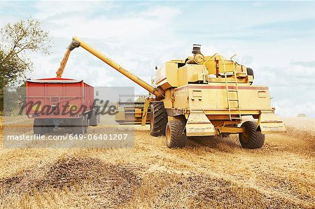 Tractor harvesting grains in crop field Stock Photo - Premium Royalty-Free, Image code: 649-06401207