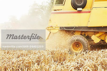 Tractor harvesting grains in crop field Stock Photo - Premium Royalty-Free, Image code: 649-06401209