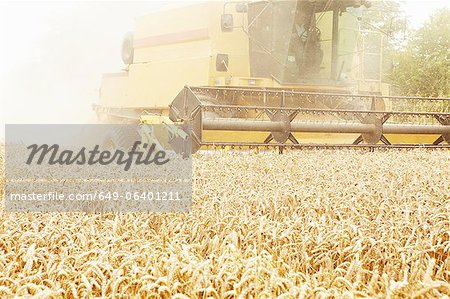 Tractor harvesting grains in crop field Stock Photo - Premium Royalty-Free, Image code: 649-06401211