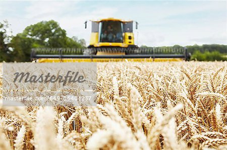 Harvester working in crop field Stock Photo - Premium Royalty-Free, Image code: 649-06401237
