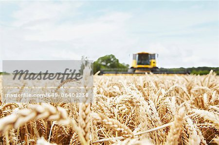 Harvester working in crop field Stock Photo - Premium Royalty-Free, Image code: 649-06401238