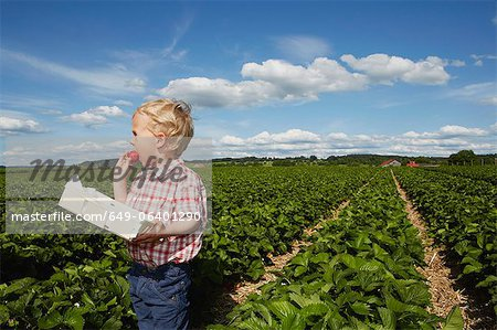 Boy eating strawberry in crop field Stock Photo - Premium Royalty-Free, Image code: 649-06401290